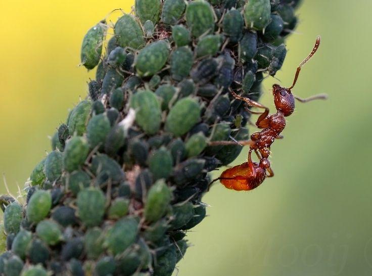 Bestrijden van insecten op planten