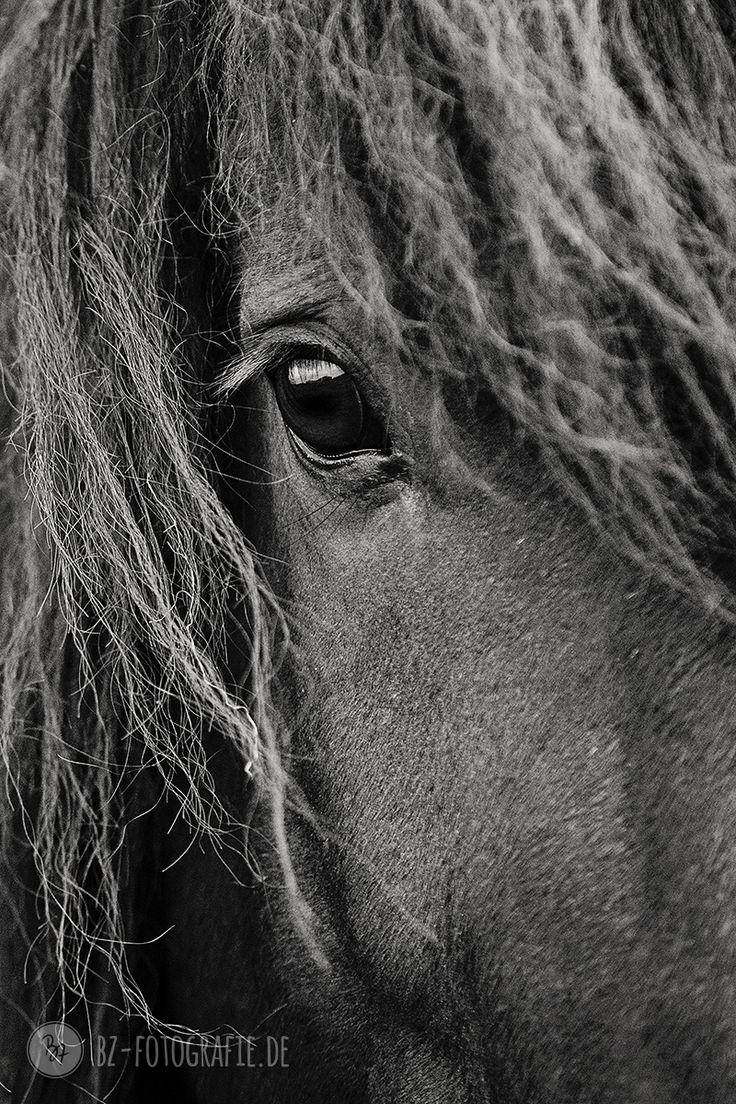 Pferdefotos in und um München