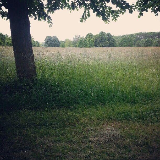 Odeur de campagne,  d'herbe coupée...