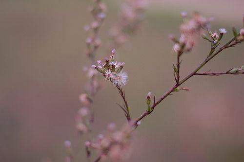 Fotografare la natura, in questo caso i fiori, è una cosa rilassante per me..  c'è chi dice sia la cosa più facile del mondo forse ha ragione, ma devi comunque avere degli occhi... devi riuscire a VEDERE... io ci provo