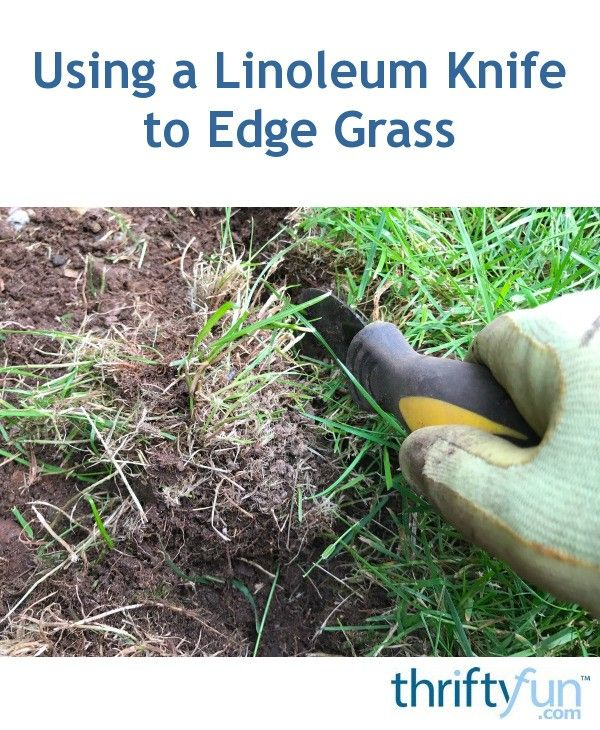 I learned to use a linoleum knife in the garden from my mother, who had learned it from her father. It is a handy tool for grass edging, weed removal, digging rocks out, and many other things. It makes quick work out of even the weediest garden. You definitely need to give it a try!