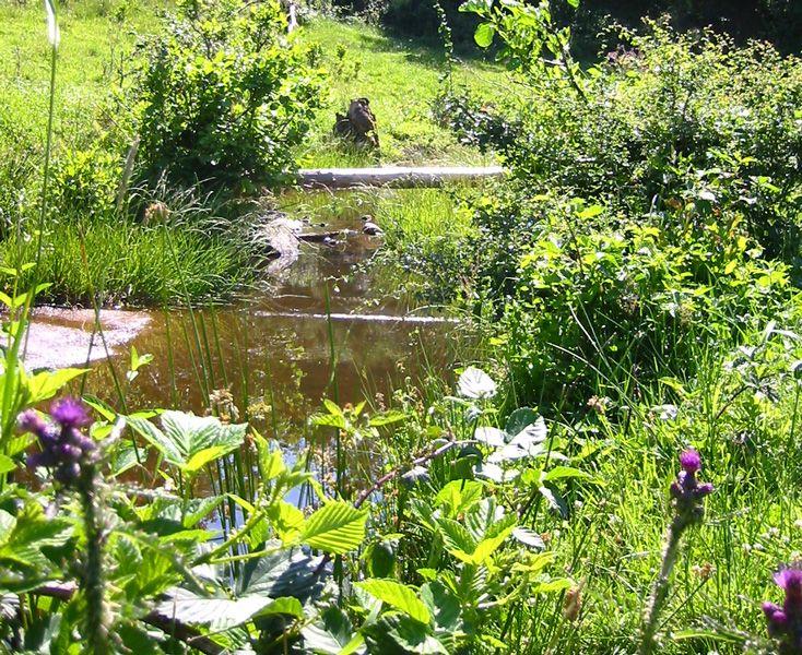 Gestion de l'eau au jardin : un bassin sans pompe ni filtre, c'est possible ! Plantez !