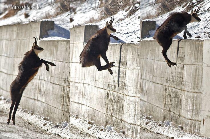 yesssssssssssss!! Fantastic jump!...