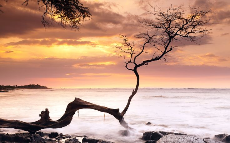 Sea, coast, tree, sunset, Hawaii, USA Wallpaper | 1920x1200 ...