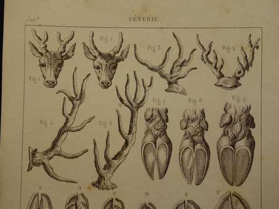 1852 DEER HUNTING antique French print with by DecorativePrints