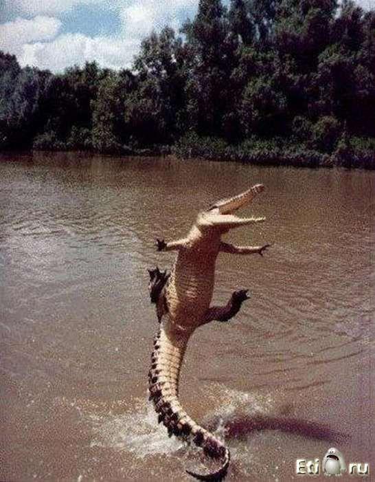 Смешные животные.Funny Animal