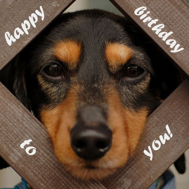 Happy Birthday to you – cute dog