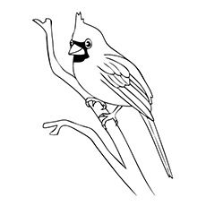 indiana bird coloring pages - photo#19