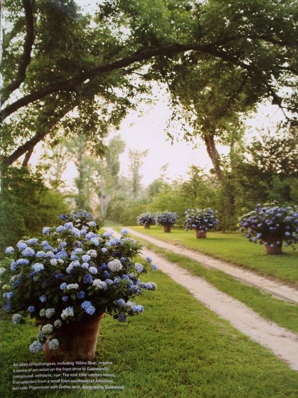 Things That Inspire: Ideas, Blue Hydrangeas, Blue Flowers, Driving Way, Flowers Pots, Pots Hydrangeas, Driveways, Gardens, Pots Flowers