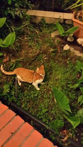 Hunting in the courtyard garden
