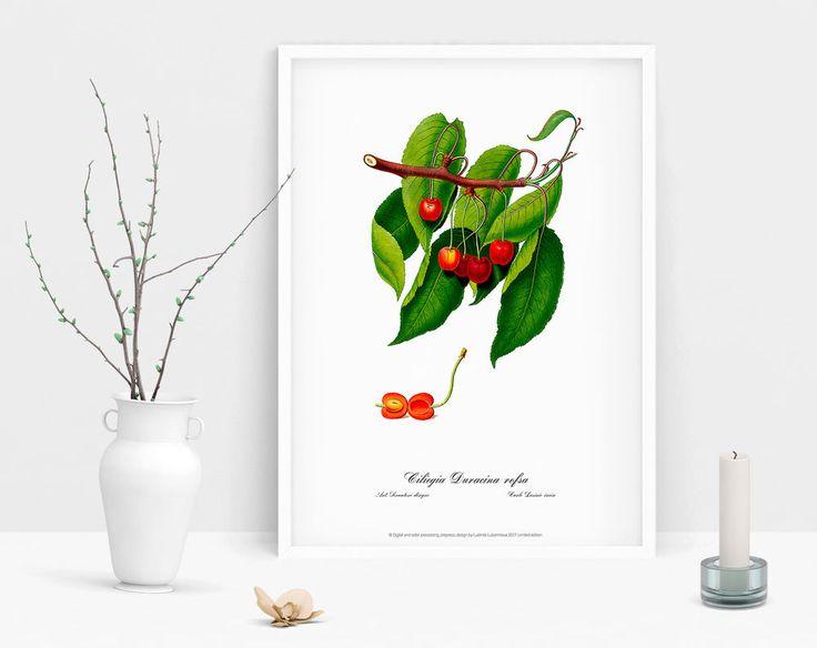 Watercolour art print cherry Botanical art poster vintage antique picture home  #Vintage