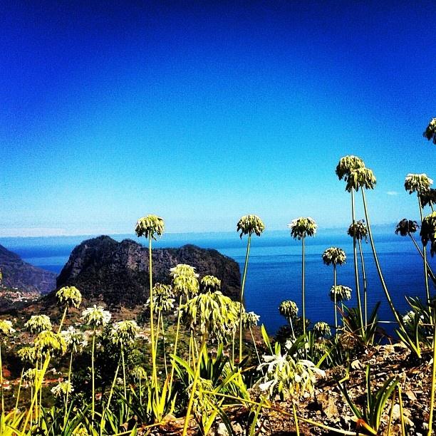 Ilha da Madeira www.jacobos.nl