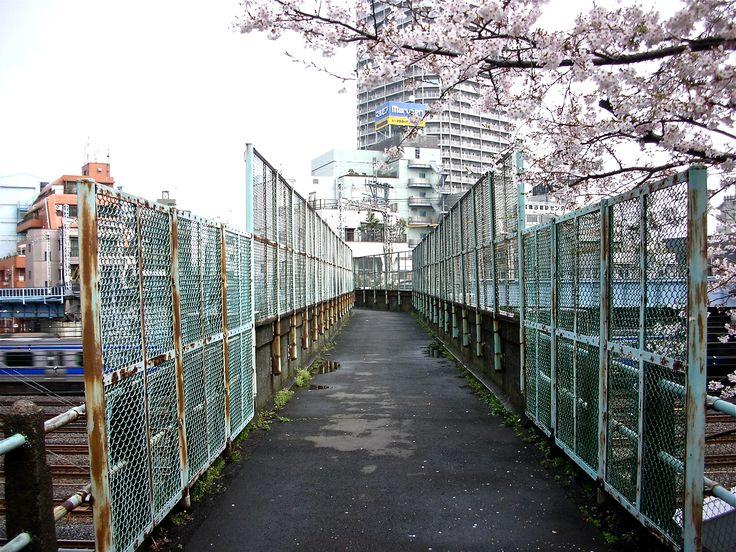 Cerisier du Japon à l'entrée du pont  © Stefan Liberski