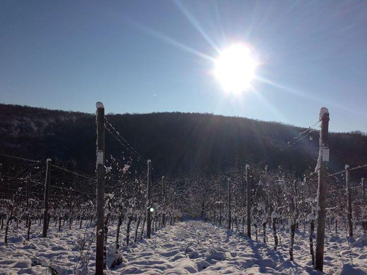 Guldental, Deutschland im Winter 2014/2015