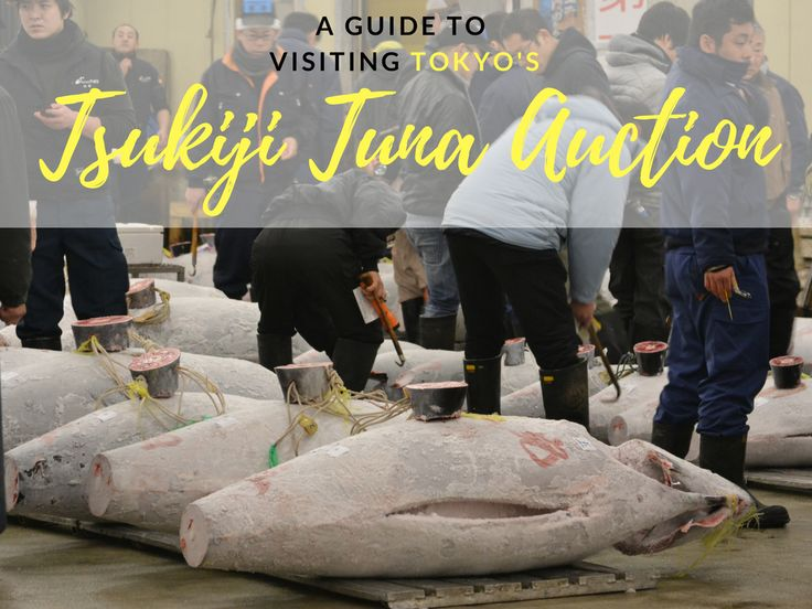 We've put together this guide with everything you need to know if you're planning a trip to the Tuna Auction at the Tsukiji Fish Market in Tokyo