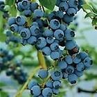 #1 Blueberries