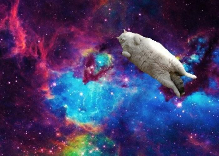 Cats In Space Iphone Wallpaper