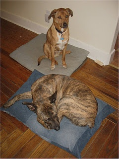 use old jeans to make dog beds!
