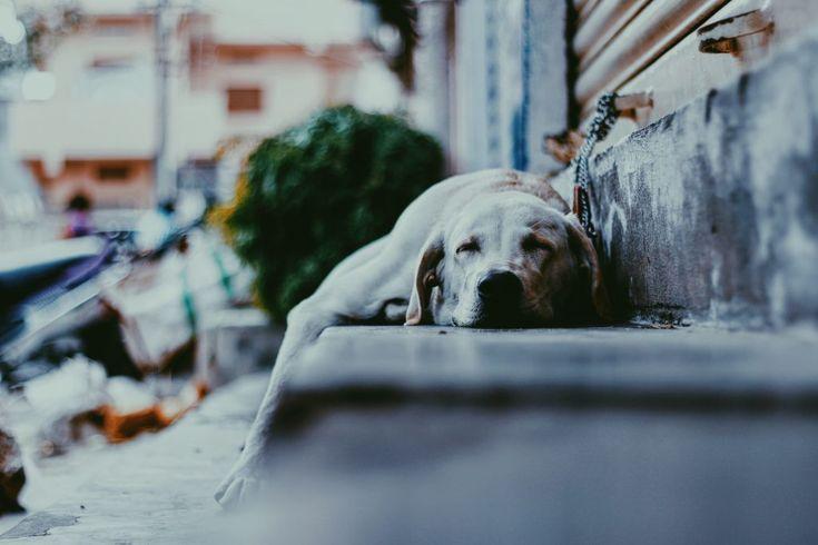 Download this free photo here www.picmelon.com #freestockphoto #freephoto #freebie /// Dog Sleeping in the Street | picmelon