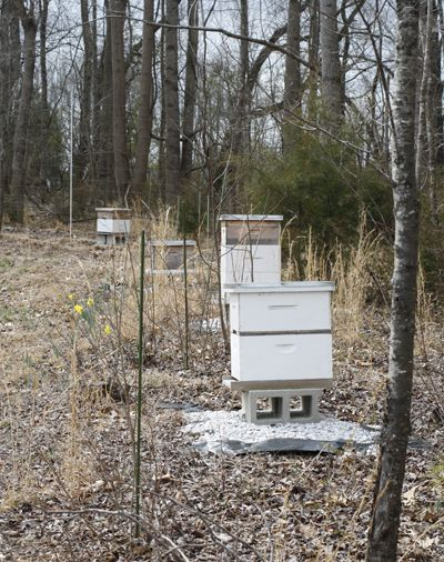 The beehives.