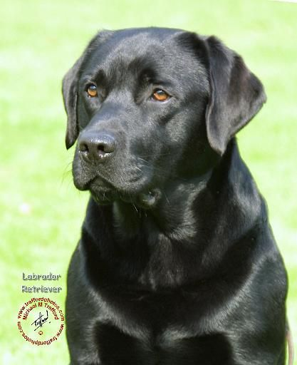 I want a black lab so bad. They're my favorite color, don't tell River!