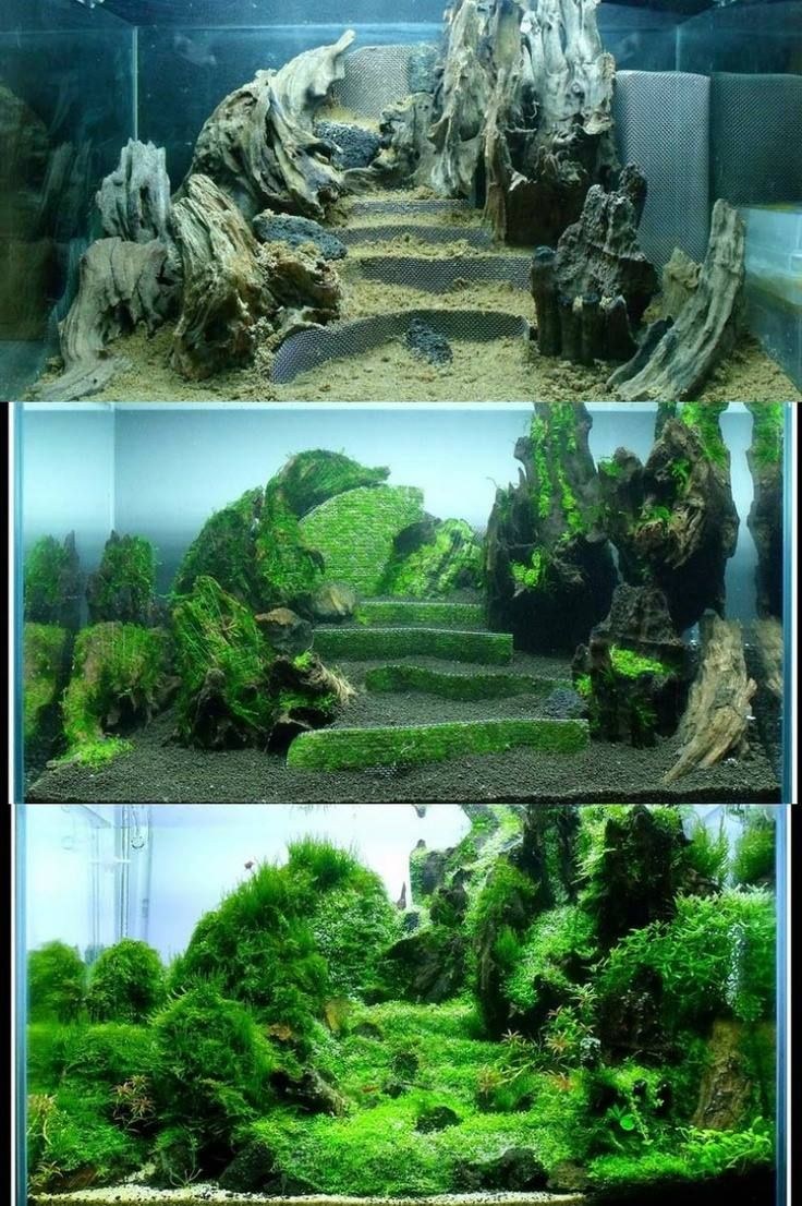 Evolution Of An Aquascape Based On Terraces.