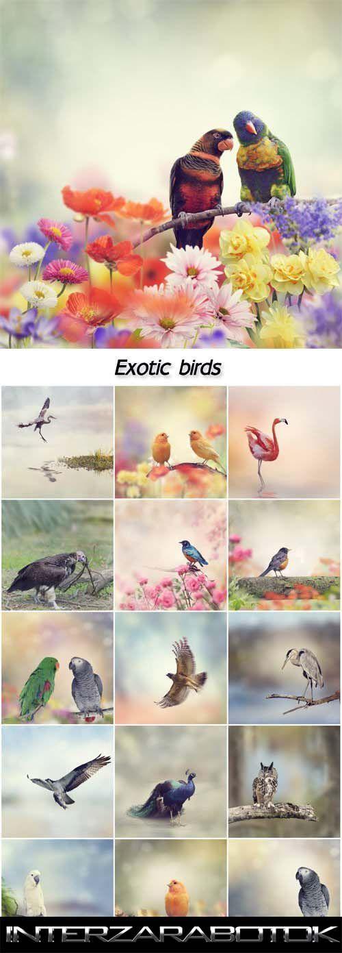 Стоковые фото – Экзотические птицы, фламинго, павлины, попугаи