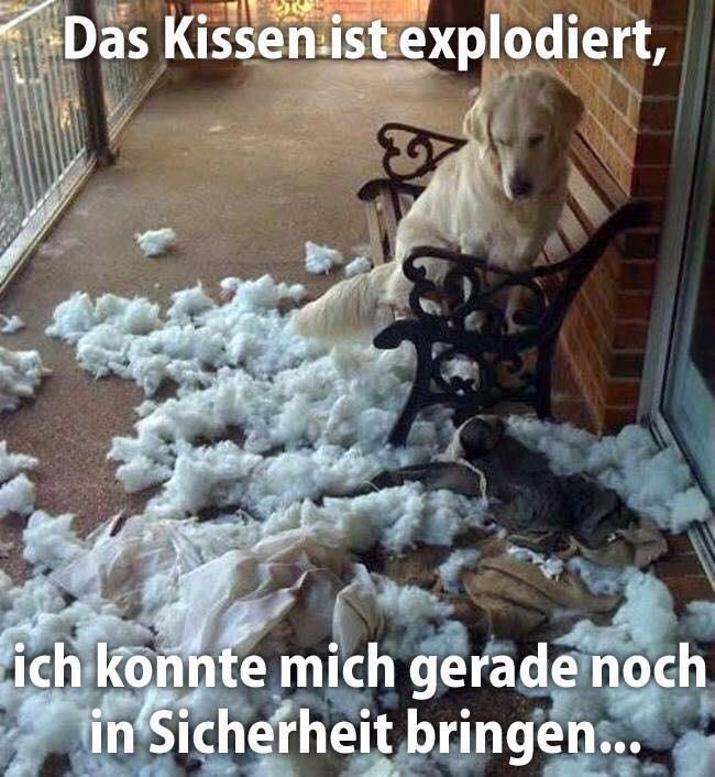 Das Kissen ist explodiert...