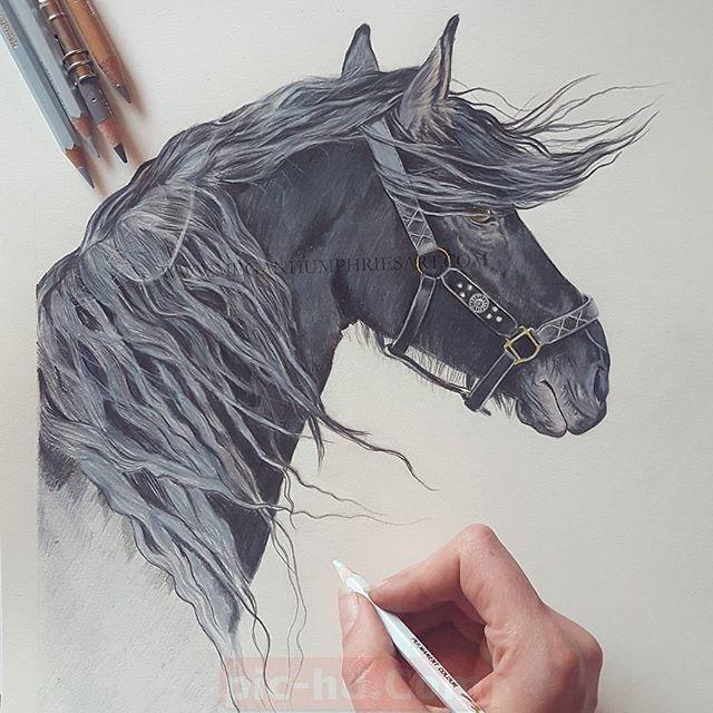 أجمل خلفيات خيول صور الحصان In 2021 Beauty Style Horses
