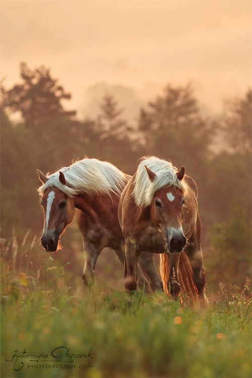 .country horses