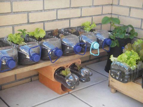 Plastic bottles become a container garden!  Perfect for our small outdoor space.