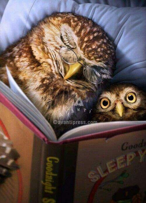 baby owl is still awake