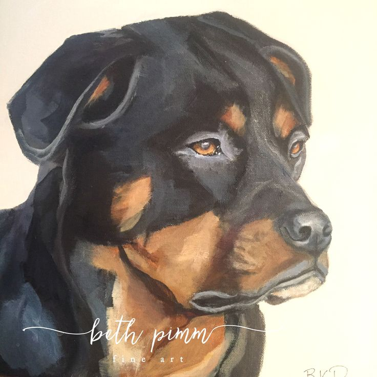 """Myah"" Sadly missed.  A painting I did for a friend on 12x12 inch canvas.  Contact me for commissions!  www.bethpimmfineart.com"