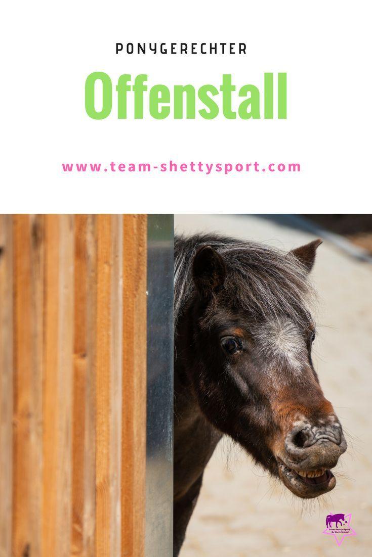 Offenstall Pferdehaltung Pferde Ponys
