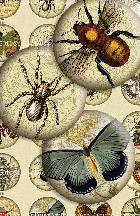 Victorian Entomology with Scrolls, Antique Script and Antique Maps - 1-1/2 Inch Circles - Digital Collage Sheet