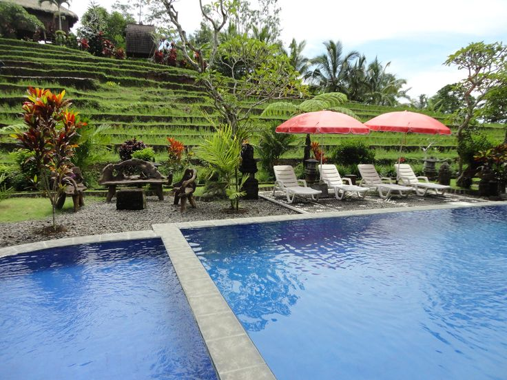 A glorious swimming pool in the middle of rice fields in a tropical garden of trees and flowers. This a soozing garden hotel