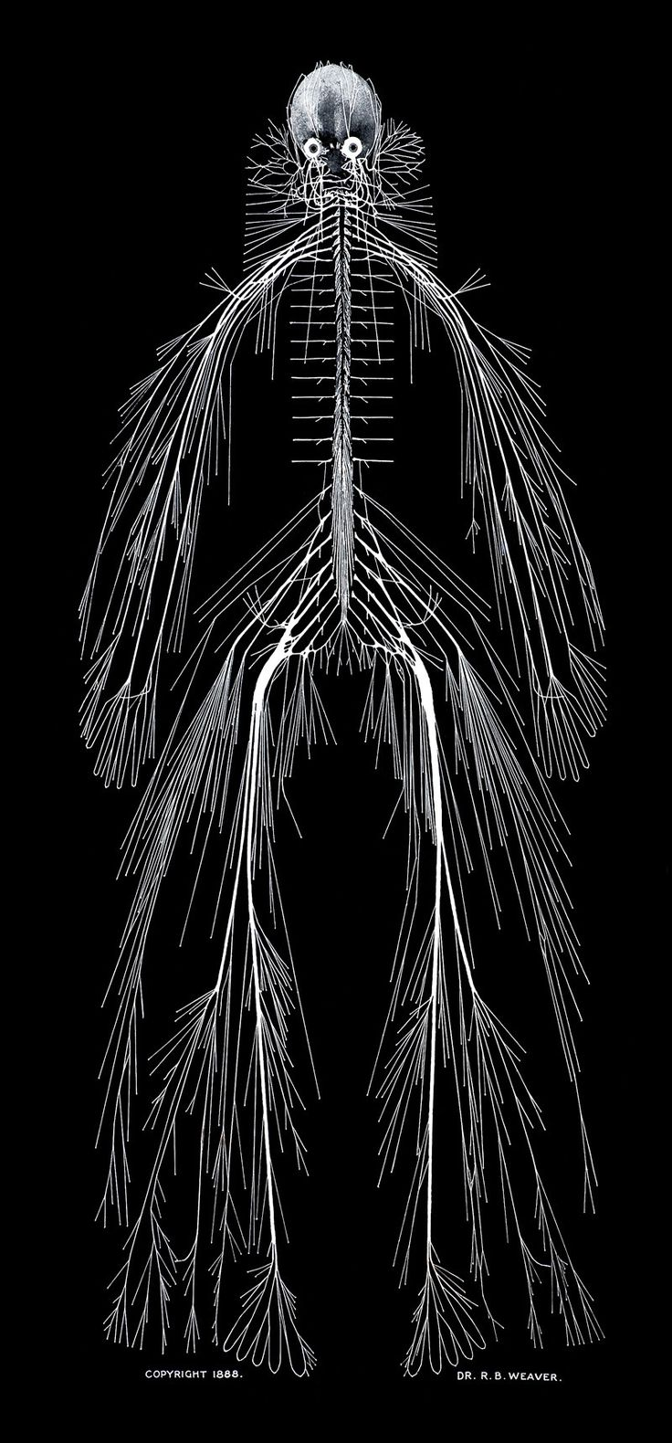 A model of the human nervous system, by Rufus Benjamin Weaver (https://pinterest.com/pin/287386019946940358/). 1888.