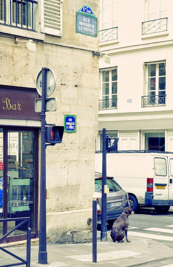paris, rue monsieur le prince