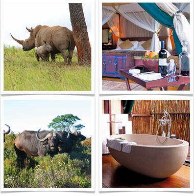 Stay at the 4* Botlierskop Private Game Reserve in Mosselbay, Western Cape and be surrounded by nature at its very best.