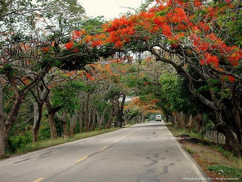 Carretera Lorica - Monteria. Colombia
