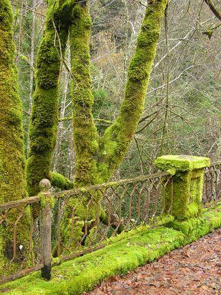 .: Half Baths, Moss Art, Moss Ferns, Bathroom Vanities, Moss Gardens, Mossy Trees, Mossy Greens