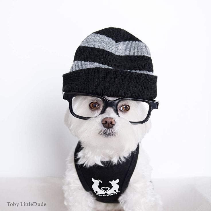 Toby LittleDude, the adorable hip-ster dog that will melt your heart  <3