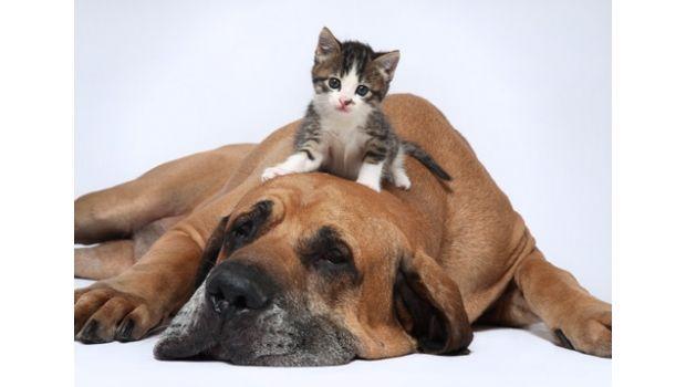 Filosofía sin escrúpulos. ¿Animales con derechos?