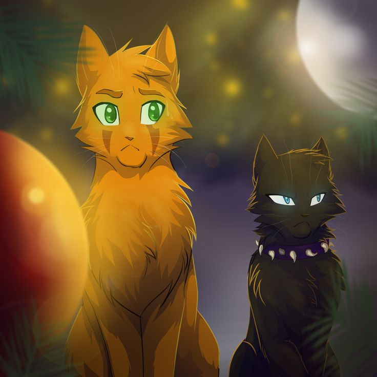 Warriors Erin Hunter Books In Order: 17 Best Ideas About Warrior Cats Scourge 2017 On Pinterest