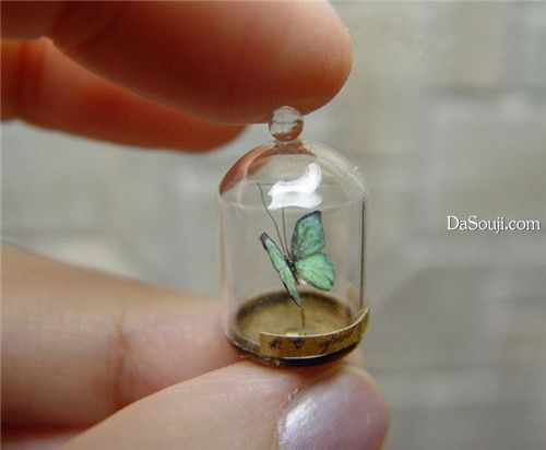 ♕ tiny butterfly in cloche