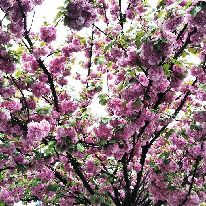 Albero in fiore e che fiore