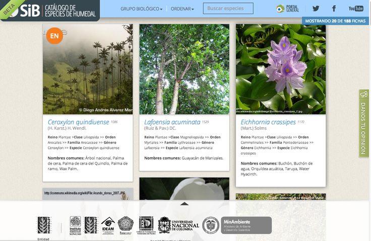 Catálogo de especies de humedales