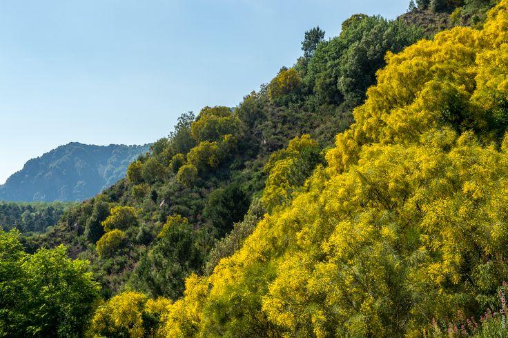 #pixcube Foto Parco Nazionale #vesuvio #altopiano #ottaviano #campania #Fotografia #parchi #biodiversità #itinerari #viaggi #turismo #territorio #fotoparchi www.pixcube.it  Elenco workshop online su www.pixcube.it