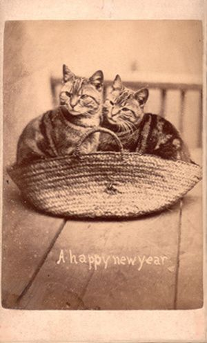 : Style, Harry Pointer, Pet, Vintage Cats, Cat Photos, Lolcats 1870S, Animal