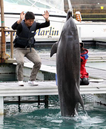 【中日】周平イルカ触って「ナスみたい」